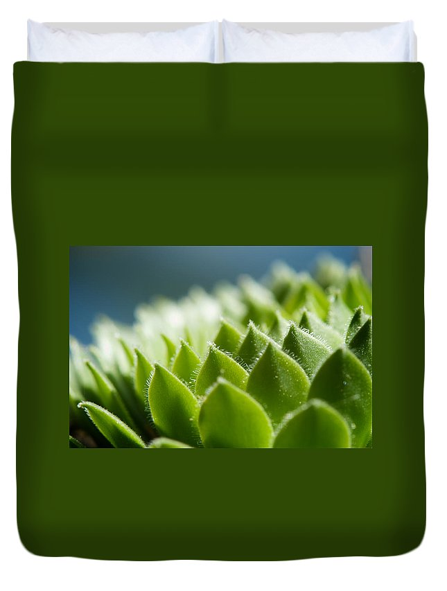 Hen And Chicks Duvet Cover featuring the photograph Succulent by Lisa Knechtel