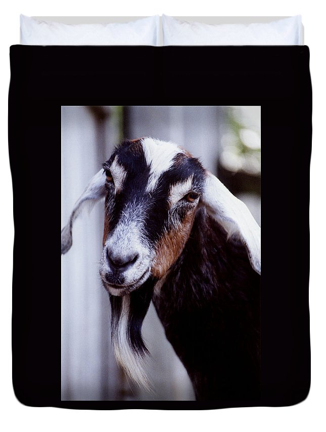 Animals Duvet Cover featuring the photograph Sugarplum by Jan Amiss Photography