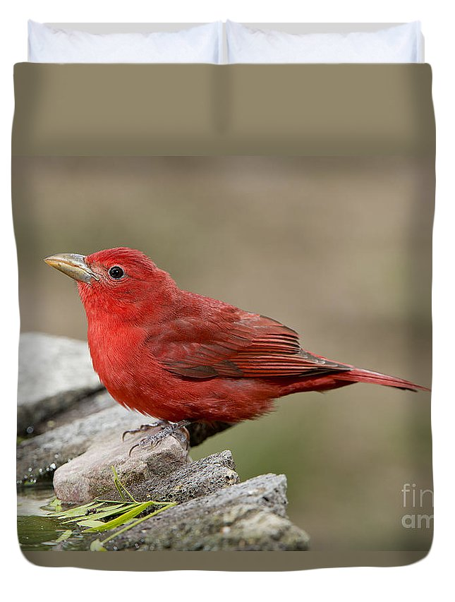 Summer Tanager Duvet Cover featuring the photograph Summer Tanager by Anthony Mercieca