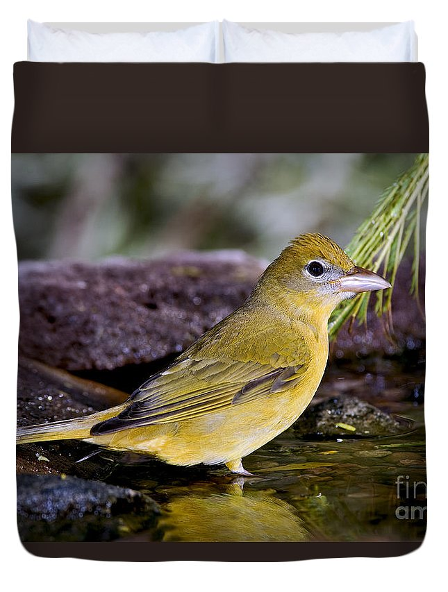 Summer Tanager Duvet Cover featuring the photograph Summer Tanager Female In Water by Anthony Mercieca