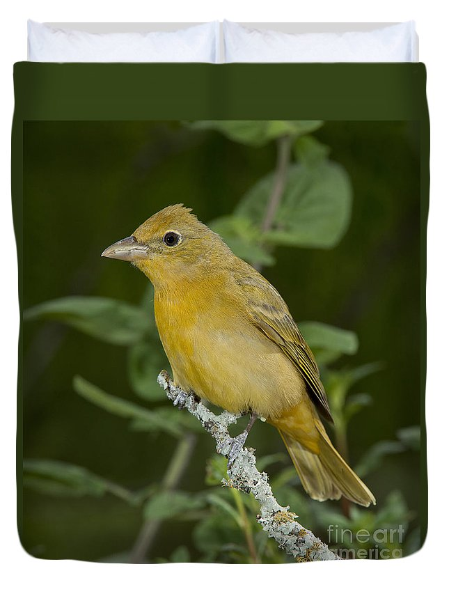 Summer Tanager Duvet Cover featuring the photograph Summer Tanager Hen by Anthony Mercieca