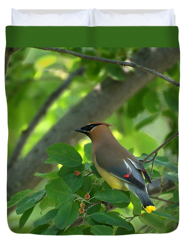 Cedar Waxwing Duvet Cover featuring the photograph Summer Visitor by Robert DeFosses