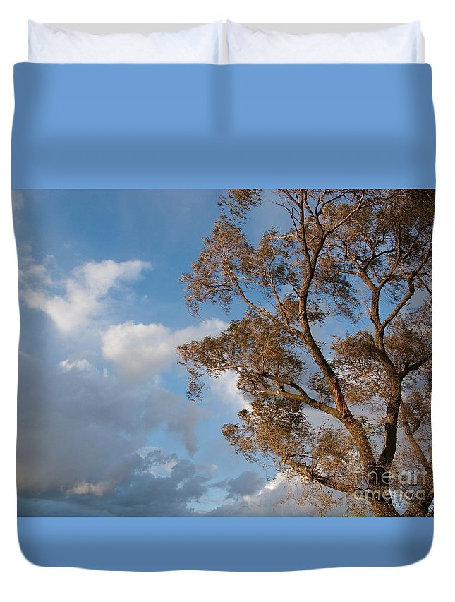 Tree Duvet Cover featuring the photograph Sun And Wind by Ann Horn