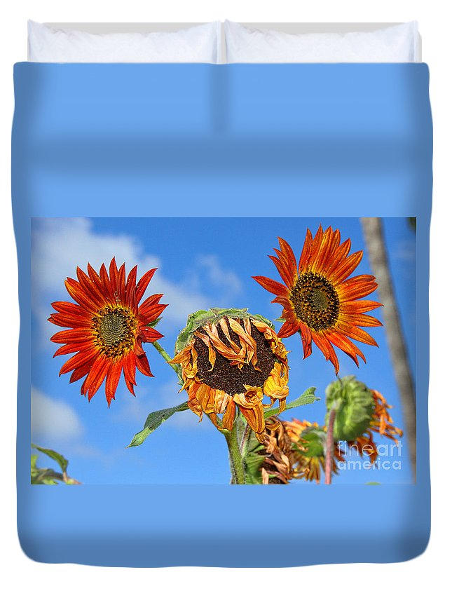 Sunflower Duvet Cover featuring the photograph Sun Drenched In Autumn By Diana Sainz by Diana Raquel Sainz