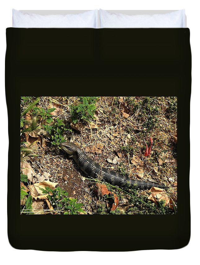 Dragon Duvet Cover featuring the photograph Sunbathing Beauty 2 by Mark Blauhoefer