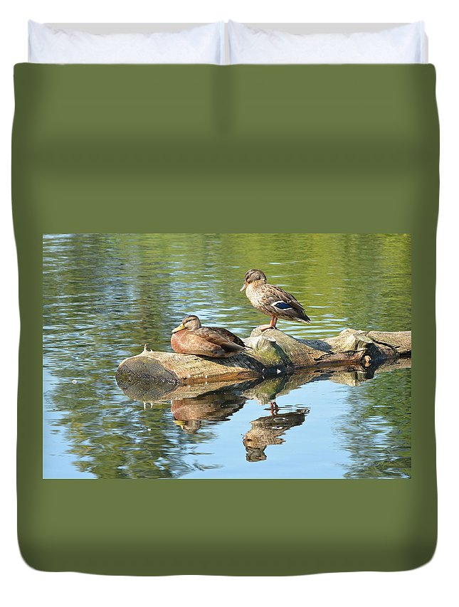 Mallard Duvet Cover featuring the photograph Sunbathing Mallards Reflecting by Nicki Bennett