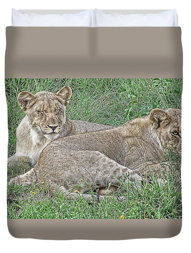 Lioness Duvet Cover featuring the photograph Sunday Afternoon Nap by Douglas Barnard