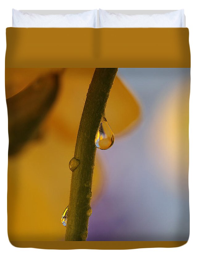 Daffodil Duvet Cover featuring the photograph Sundrop by Connie Handscomb