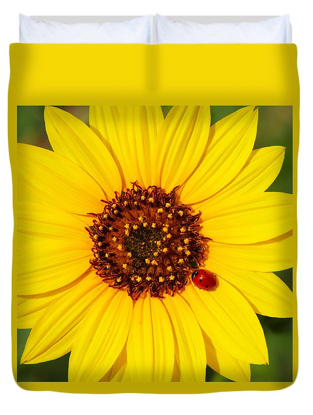 Ladybug Duvet Cover featuring the photograph Sunflower And Ladybird Beetle 2am-110490 by Andrew McInnes