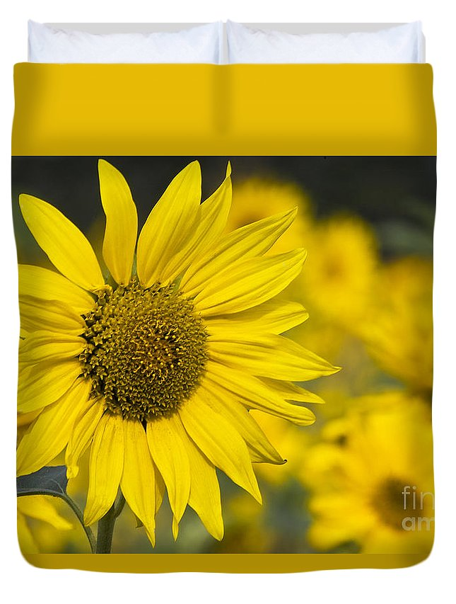 Sunflower Duvet Cover featuring the photograph Sunflower Blossom by Heiko Koehrer-Wagner
