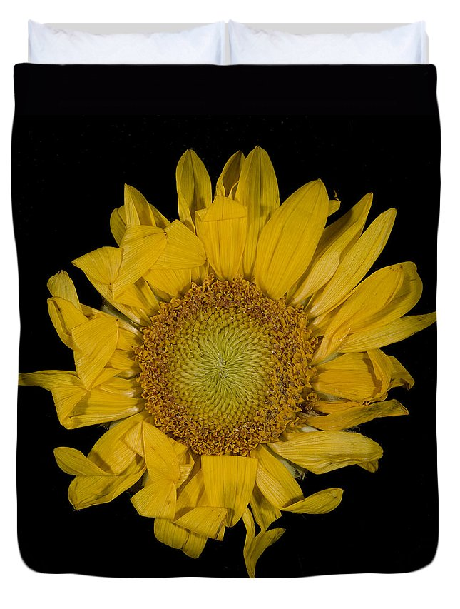 Sunflower Duvet Cover featuring the photograph Sunflower by David Stone