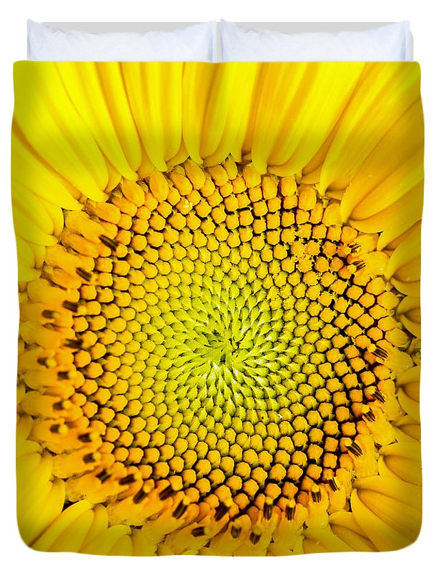 Sunflower Seeds Duvet Covers