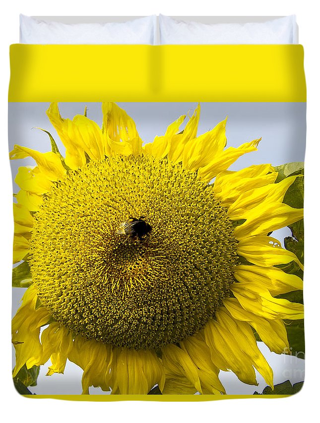 Nature Duvet Cover featuring the photograph Sunflower by Heiko Koehrer-Wagner