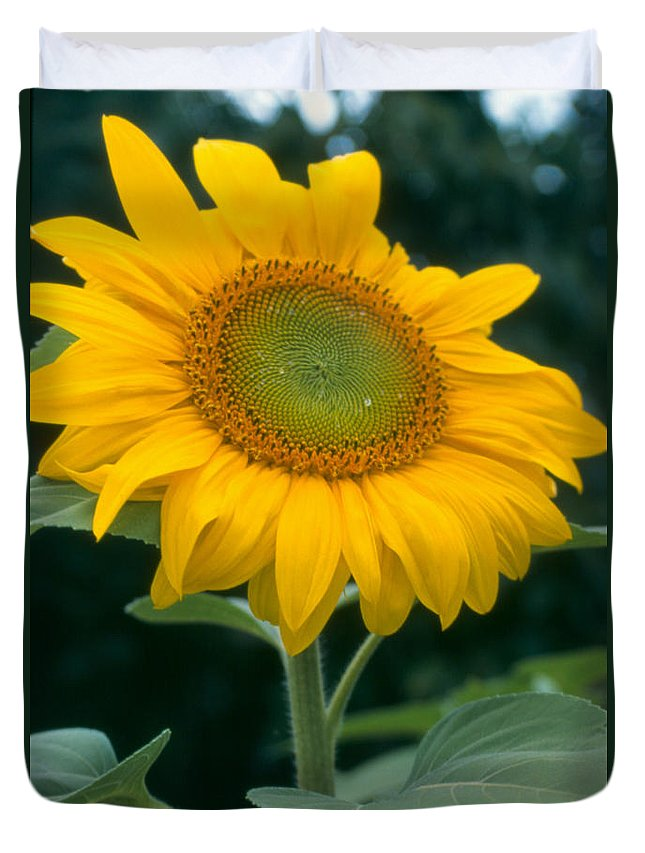 Flower Duvet Cover featuring the photograph Sunflower In Seattle by Heather Kirk