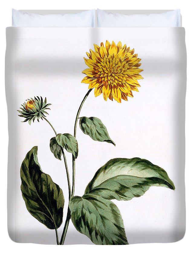 Still-life Duvet Cover featuring the painting Sunflower by John Edwards