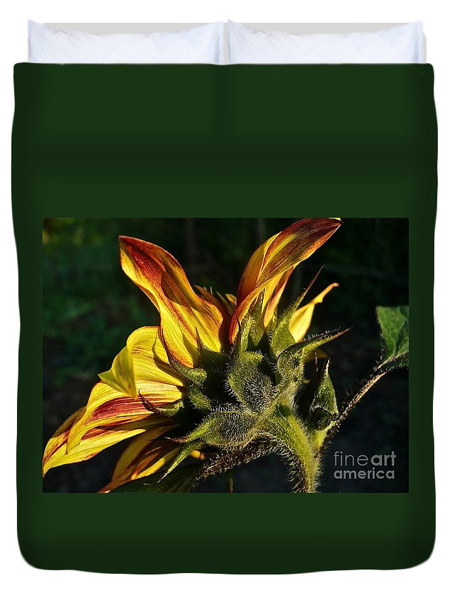 Flower Duvet Cover featuring the photograph Sunflower Profile by Linda Bianic