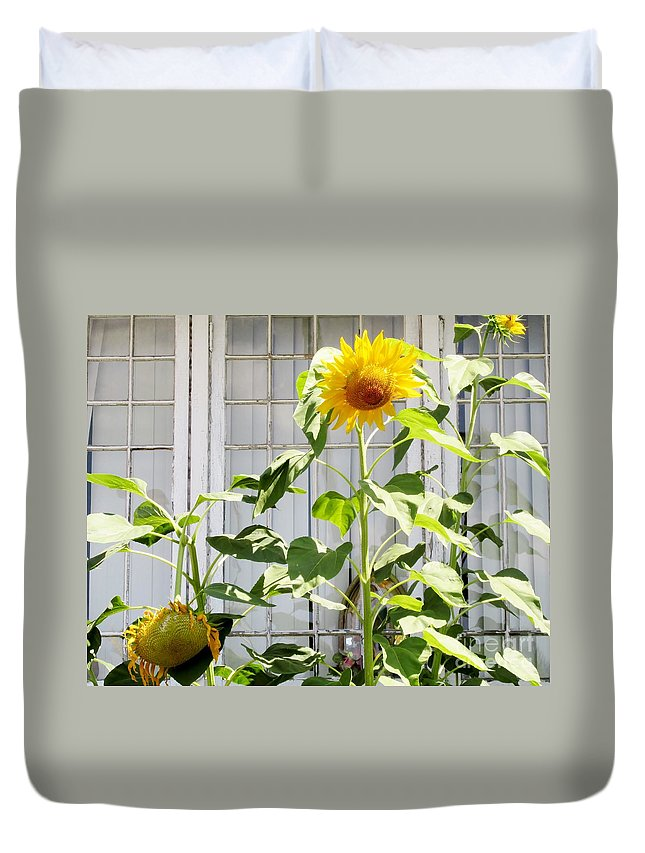 Sunflowers Duvet Cover featuring the photograph Sunflowers In The Window by Don Baker