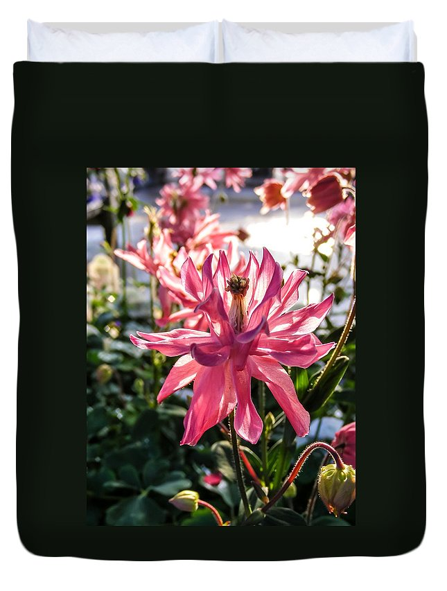 Very Fancy Pink Columbine Duvet Cover featuring the photograph Sunlit Fancy Pink Columbine by Cynthia Woods