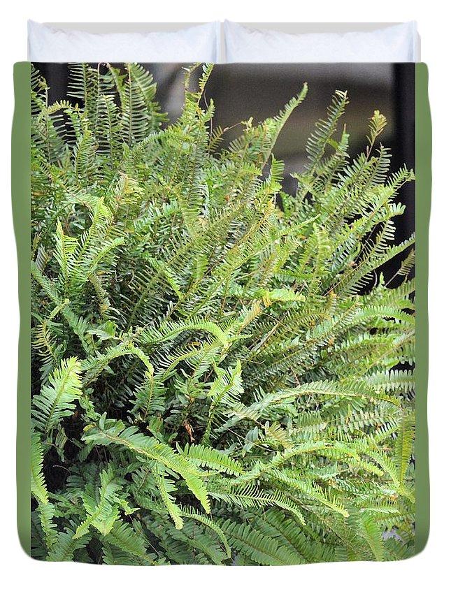 Sunlit Ferns Duvet Cover featuring the photograph Sunlit Ferns by Maria Urso
