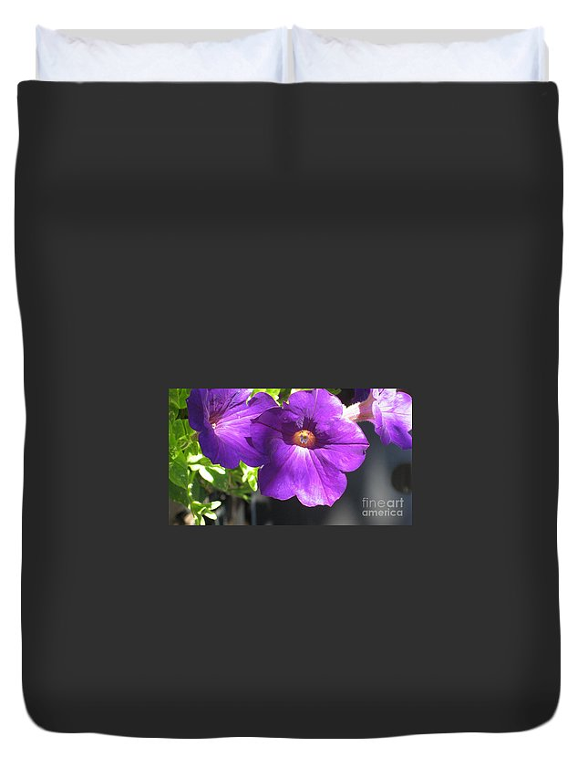 Petunia Duvet Cover featuring the photograph Sunlit Petunias by Ray Konopaske
