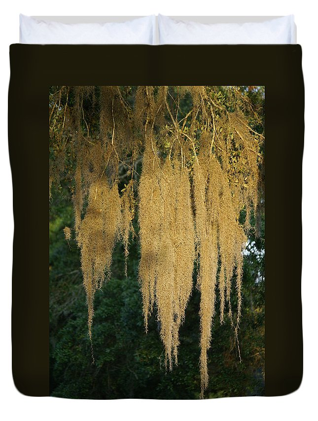 Spanish Moss Duvet Cover featuring the photograph Sunlit Spanish Moss by Evelyn Hill