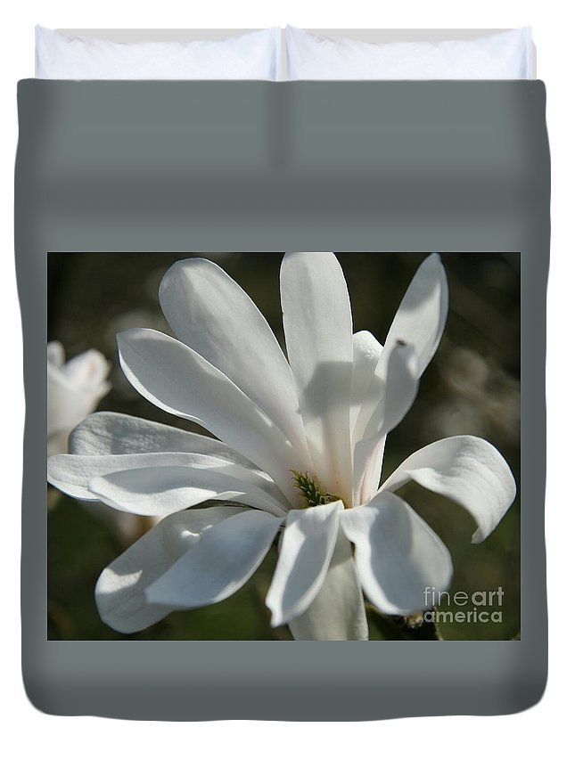 Magnolia Duvet Cover featuring the photograph Sunlit White Magnolia by Christiane Schulze Art And Photography