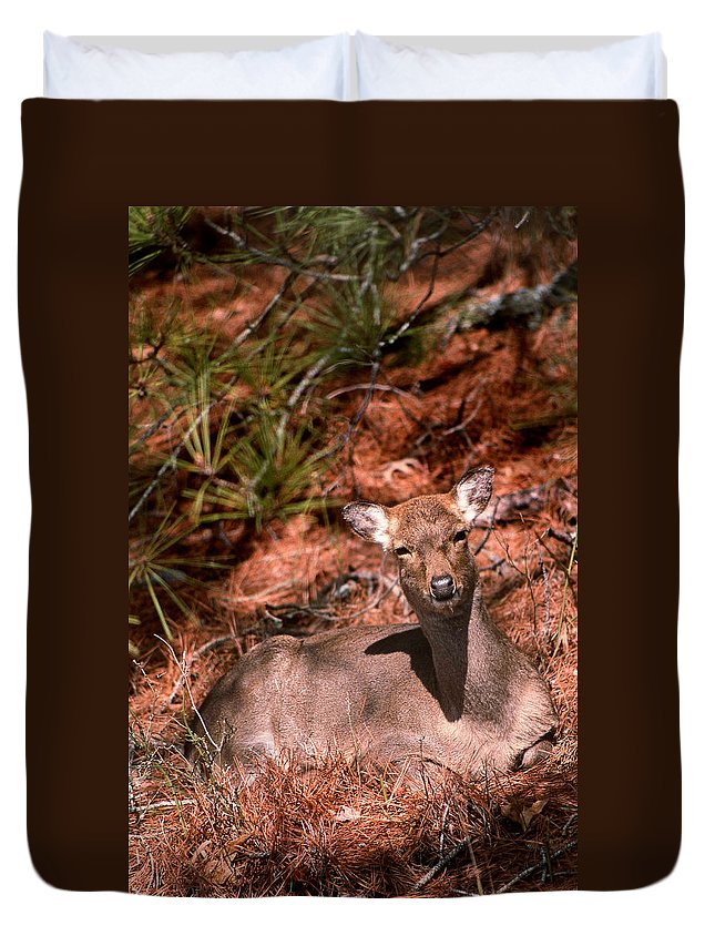 Deer Duvet Cover featuring the photograph Sunny Spot Nap by Skip Willits