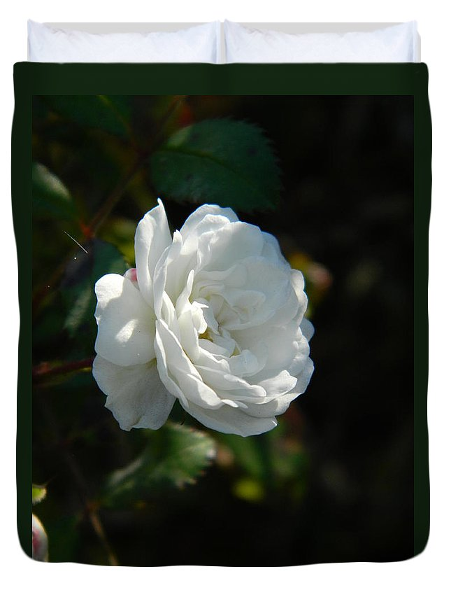 Sun Duvet Cover featuring the photograph Sunshine White Rose by Nicki Bennett