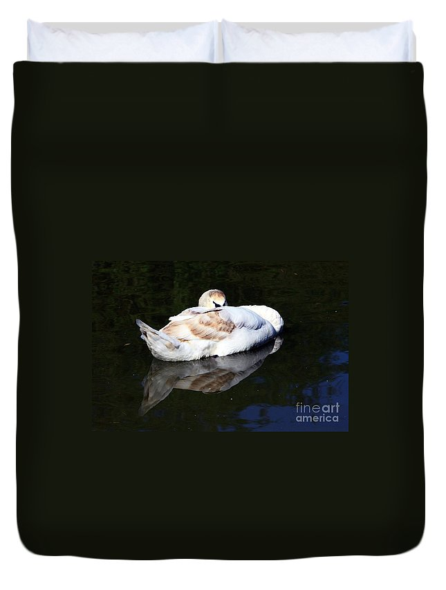 Swan Duvet Cover featuring the photograph Swan Asleep by Jeremy Hayden