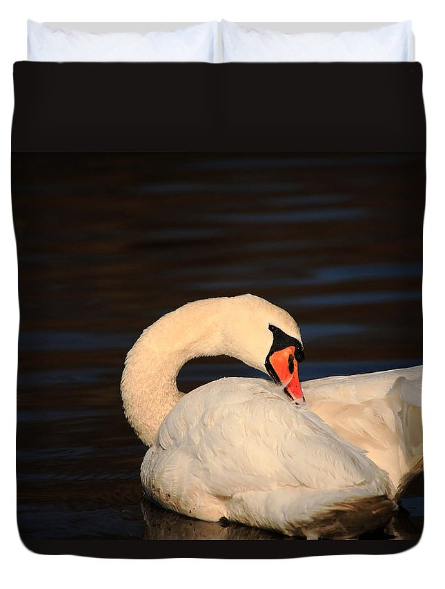 Swan Duvet Cover featuring the photograph Swan Grooming by Karol Livote