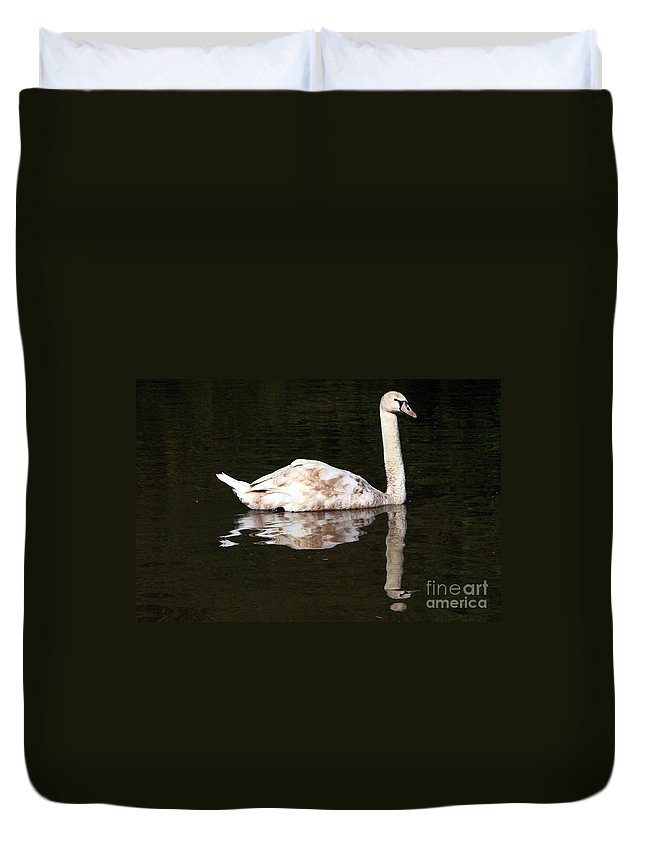 Swan Duvet Cover featuring the photograph Swan Reflection by Jeremy Hayden
