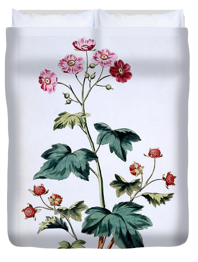 Still-life Duvet Cover featuring the painting Sweet Canada Raspberry by John Edwards