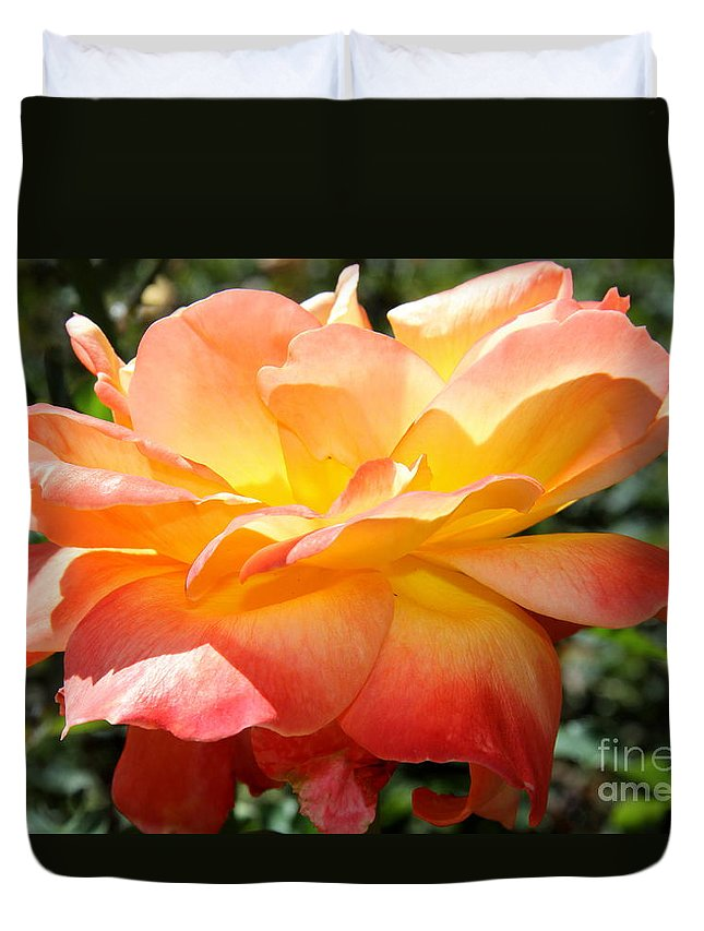 Rose Duvet Cover featuring the photograph Sweet Juliet Rose by Christiane Schulze Art And Photography