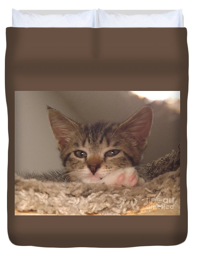 Kittens Duvet Cover featuring the photograph Symphony Keeping Watch by Jussta Jussta