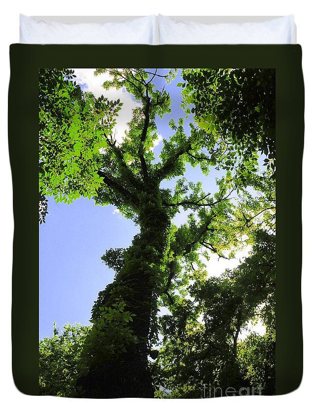 Tall Duvet Cover featuring the photograph Tall Trees by Kathleen Struckle