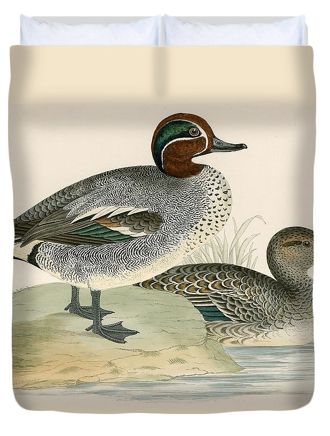 Birds Duvet Cover featuring the photograph Teal by Beverley R. Morris