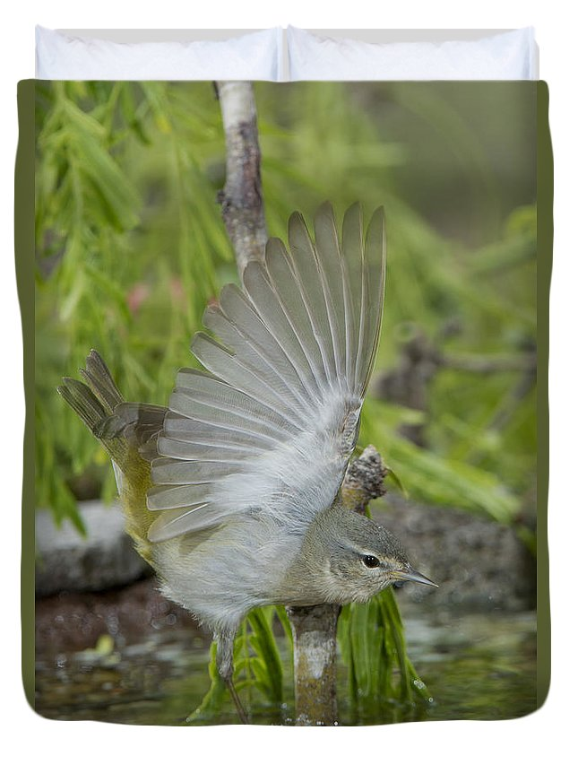Tennessee Warbler Duvet Cover featuring the photograph Tennessee Warbler by Anthony Mercieca