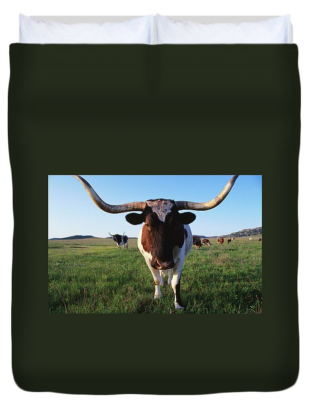 Horned Duvet Cover featuring the photograph Texas Longhorn Cattle by John Elk