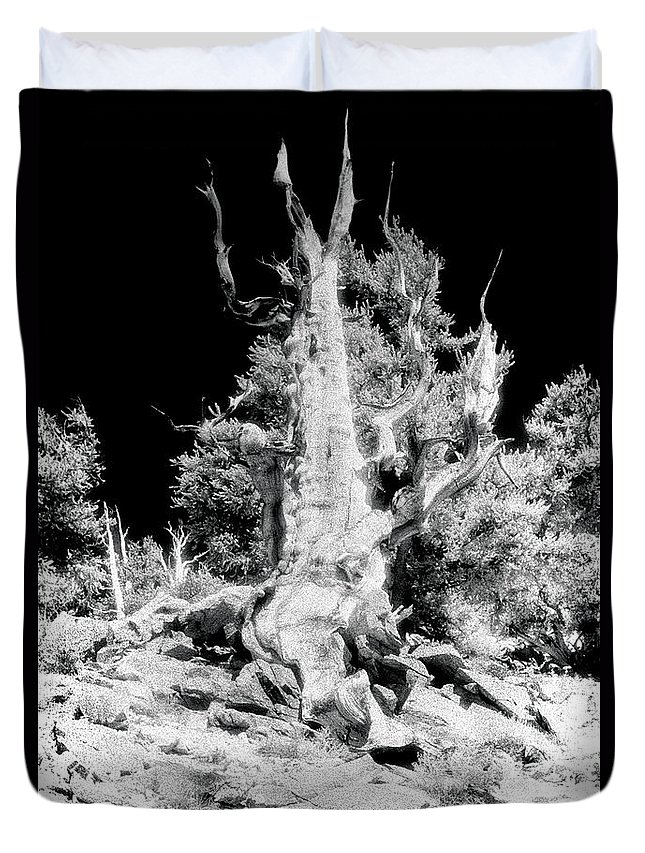Bristlecone Duvet Cover featuring the photograph The Ancients - 1010 by Paul W Faust - Impressions of Light
