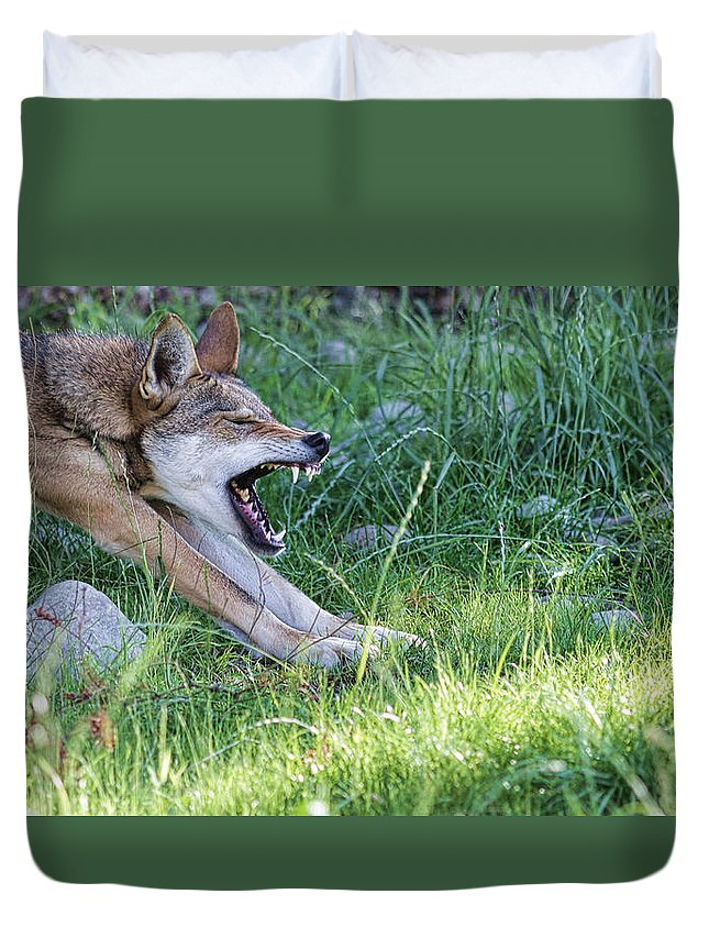Wolf Attack Duvet Cover featuring the photograph The Attack by Steve McKinzie
