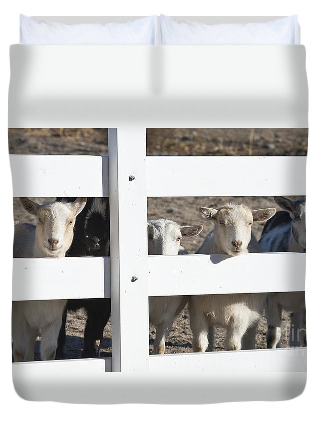 Goats Duvet Cover featuring the photograph The Audience by Dianne Phelps