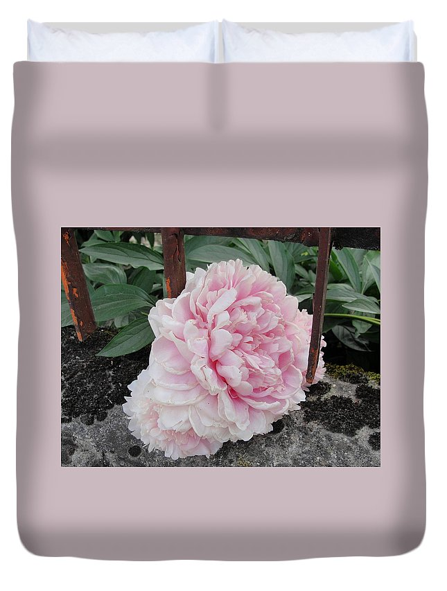 Cabbage Rose Duvet Cover featuring the photograph The Buxom Cabbage Rose by Natalie Ortiz
