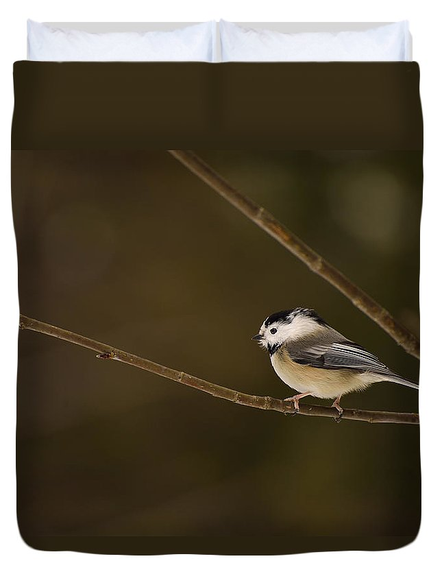 Black-capped Chickadee Duvet Cover featuring the photograph The Cutest Songbird by Joshua McCullough