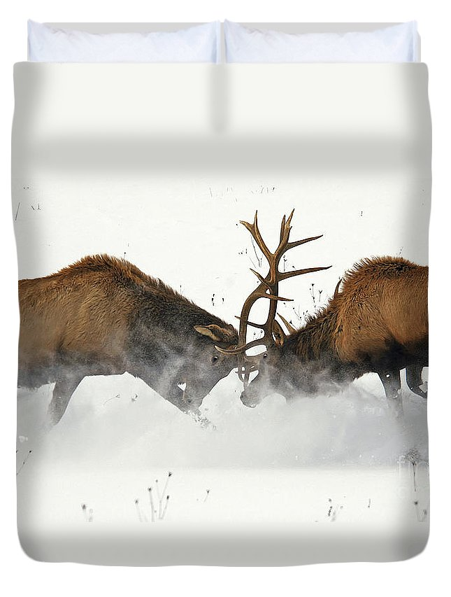 Elk Duvet Cover featuring the photograph The Duel Of Fighting Elk by Timothy Flanigan