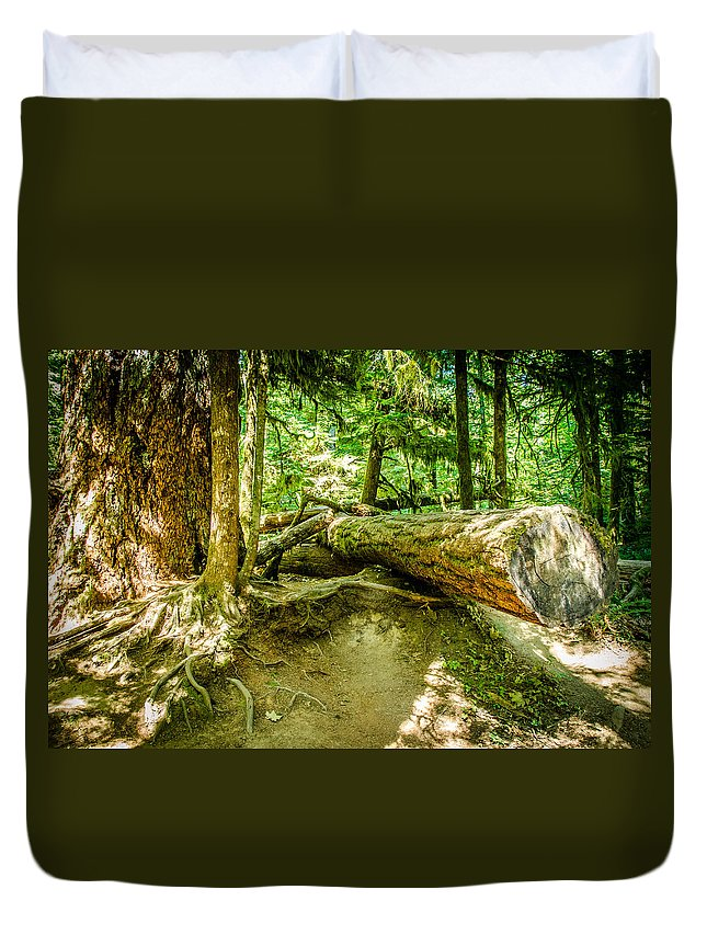 Old Growth Forest Duvet Cover featuring the photograph The Fallen Collection 10 by Roxy Hurtubise