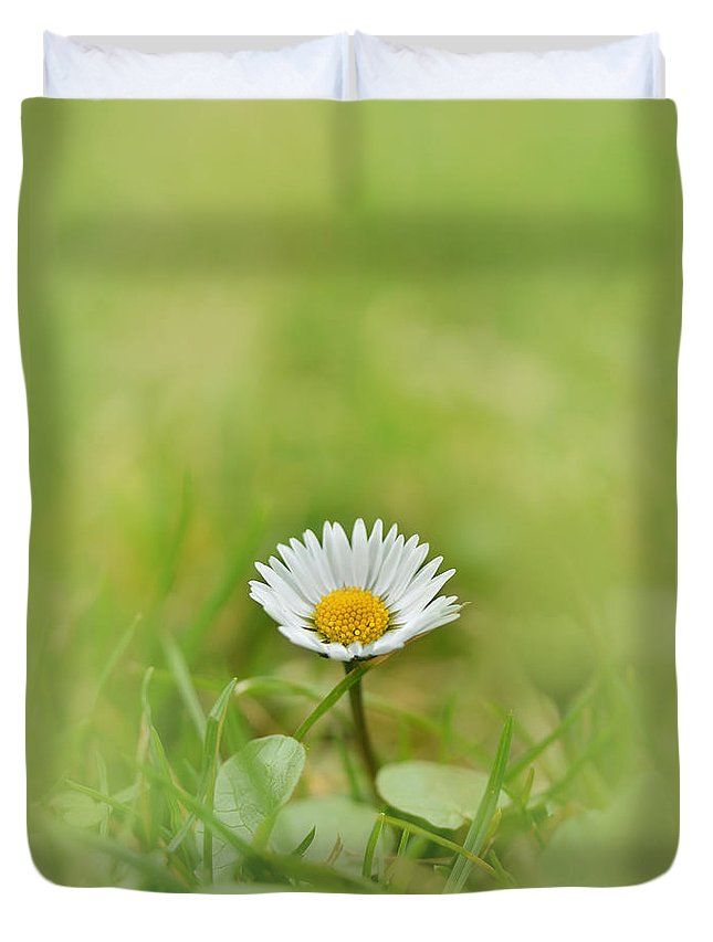 Single Duvet Cover featuring the photograph The First White Daisy by Jaroslaw Blaminsky