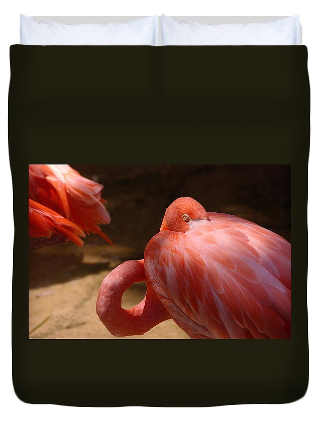 Birds. Feathers Duvet Cover featuring the photograph The Flamingo Wakens by Jeff Swan