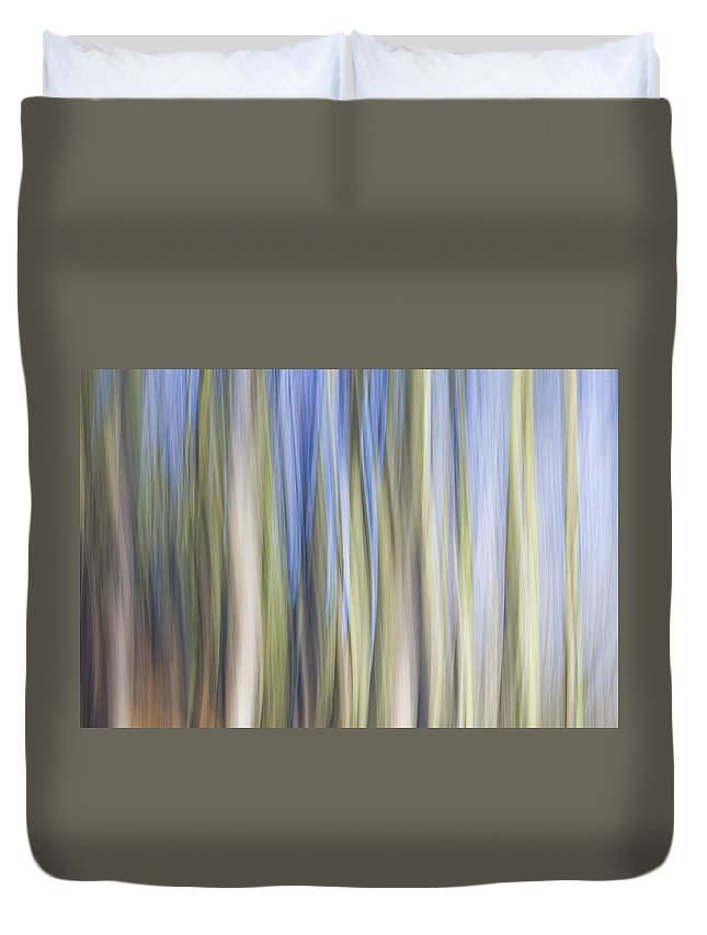 Tree Duvet Cover featuring the photograph The Flow Of Light Iv by Maria Ismanah Schulze-Vorberg