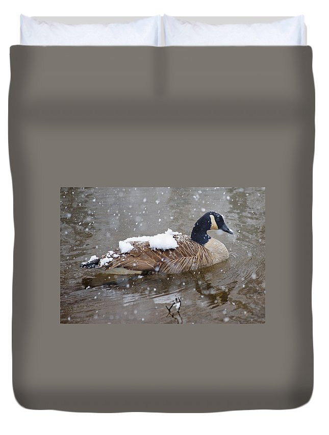 Canadian Duvet Cover featuring the photograph The Flurry Collector by Betsy Knapp