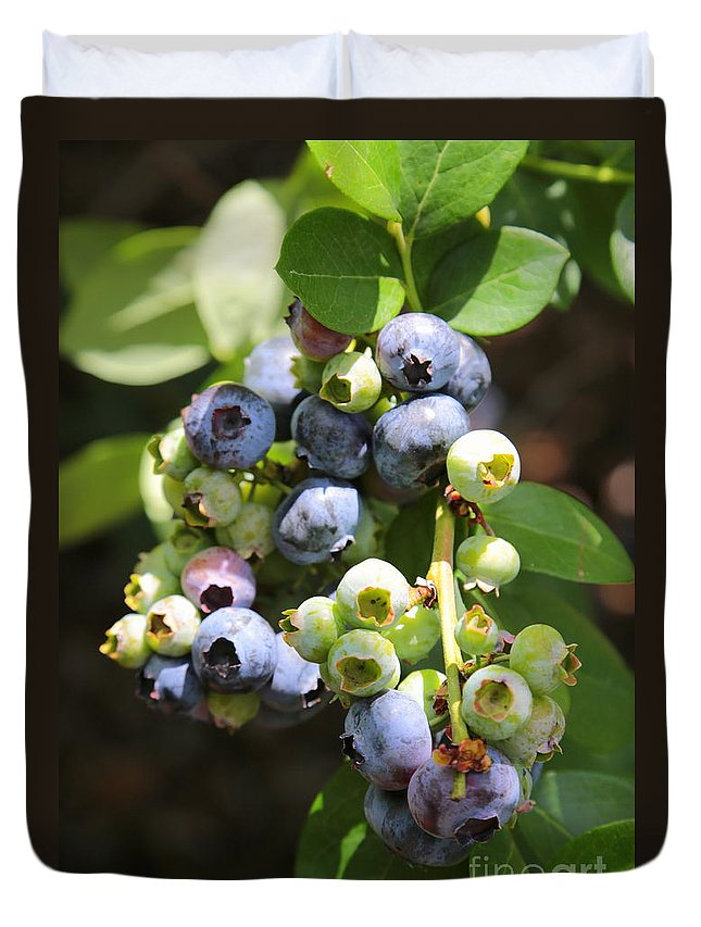 Blueberries Duvet Cover featuring the photograph The Freshest Blueberries by Carol Groenen